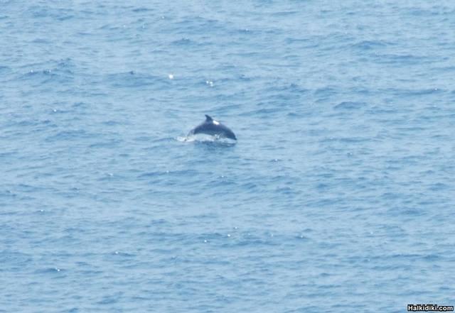 Dolphin_near_Loutra