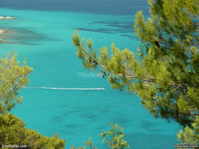 Sithonia, pine trees and blue waters