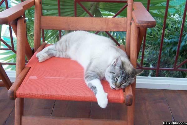 "Jez having an errrm ""cat nap"" :)"